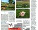 2021-05-Article reportage poules pondeuses